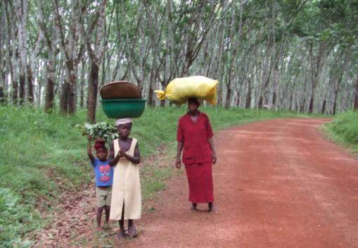 В Либерии останавливают экспорт натурального каучука